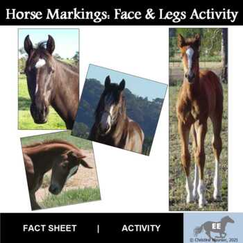 Horse Markings Activity
