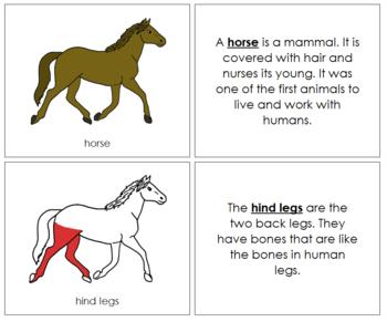 Horse Nomenclature Book (Red)
