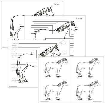 Horse Nomenclature - Elementary