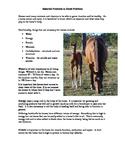 Horse Nutrients Activity