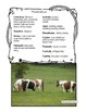 Horse: Non-Fiction Literacy Center or Close Reading Pocket Folders