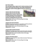 Horse Riding Theory Activities