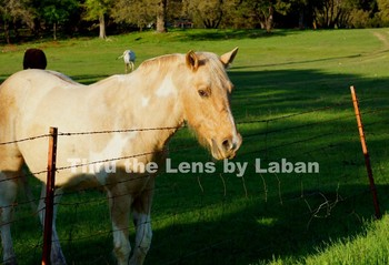 Horse Stock Photo #147