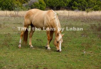Horse Stock Photo #184