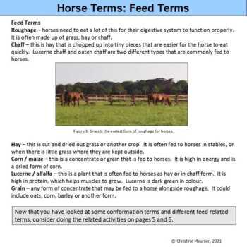 Horse Terminology Activities