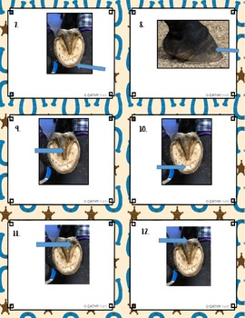 Horses, Hoof and Lower Leg External Anatomy, Task Cards, Diagrams, Vocab