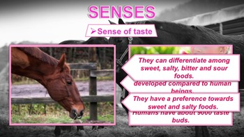 Horses - PowerPoint