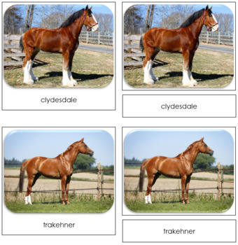 Horses Safari Toob Cards - Montessori