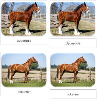 Horse Safari Toob Cards - Montessori
