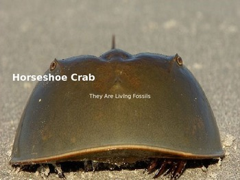 Horseshoe Crab - Power Point - Information History Facts Pictures