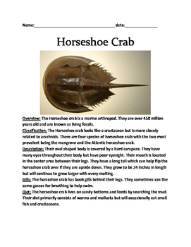Horseshoe Crab - Review Article Lesson Facts Questions Vocab word search