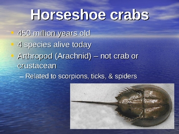 Horseshoe Crabs vs Trilobites
