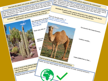 Hot Desert Plant and Animal Adaptations - Camel and Cactus.