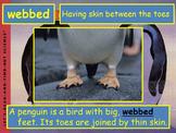 Journeys 2014 Grade 2 Penguin Chick PowerPoint