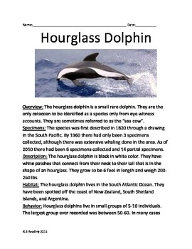 Hourglass Dolphin - Rarest Dolphin - Informational Article Questions Vocabulary