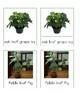 Houseplants - Montessori 3-Part Cards