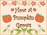 How A Pumpkin Grows