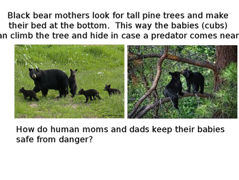 How AnimalsCare for their Young: Patterns in Behavior of Parents and Offspring