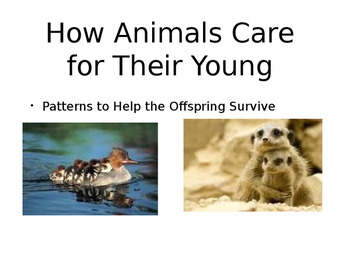 How AnimalsCare for their Young: Patterns in Behavior of P