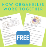 How Cell Organelles Work Together - Free version/NO KEY