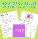 How Cell Organelles Work Together - WITH KEY