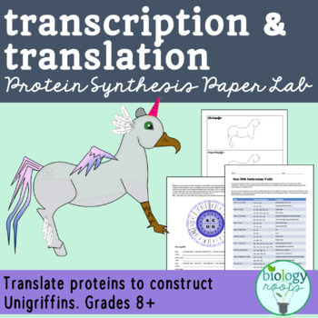 Protein Synthesis- Transcription and Translation