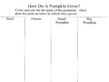 How Do A Pumpkin Grow?