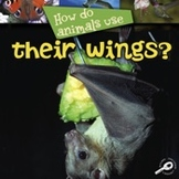 How Do Animals Use... Their Wings?