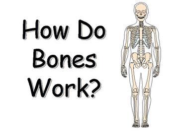How Do Bones Work PowerPoint