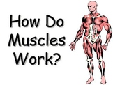How Do Muscles Work PowerPoint