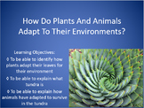 How Do Plants Adapt To Their Environments?