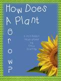 How Do  Plants Grow?  A non-fiction read aloud