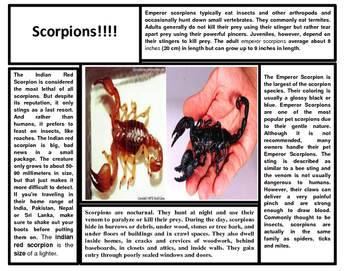 How Do Plants Grow and Scorpions Articles