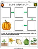 How Do Pumpkins Grow?- An Activity