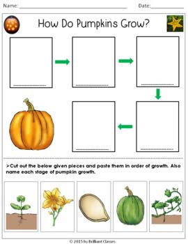 How Do Pumpkins Grow?- An Activity