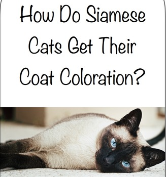 How Do Siamese Cats Get Their Coat Coloration?