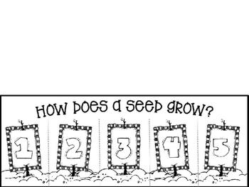 How Does a Bean Seed Grow?