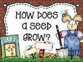 How Does a Bean Seed Grow?