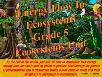How Energy Flows In Ecosystems: Grade 5 Ecosystems Unit