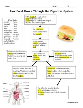 How Food Moves Through the Digestive System
