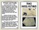 How Fossils are Made Booklet