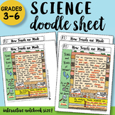 How Fossils are Made - Doodle Sheet - SO Easy to Use! PPT Included!