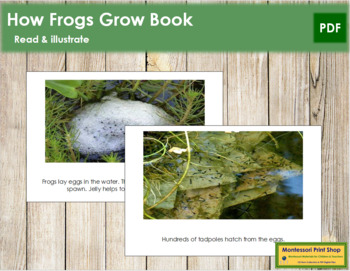 How Frogs Grow: Read and Illustrate