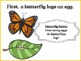 From Leaf to Sky: Butterfly Life Cycle: Presentation