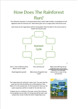 How Is The Rainforest Run?
