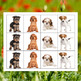 How Much is that Doggy in the Window? Counting, Sorting &