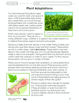 How Plants Grow Lesson Plan Grade 3