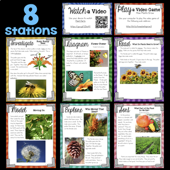 How Plants Grow & Reproduce & Pollinators - Second Grade Science Stations