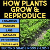 How Plants Grow & Reproduce & Pollinators BUNDLE - Second Grade Science Stations
