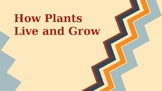How Plants Live and Grow/ Plant Life Cycle